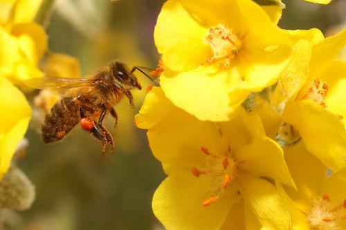Les_abeilles_en_ville_oui_mais_2_Credit_akial