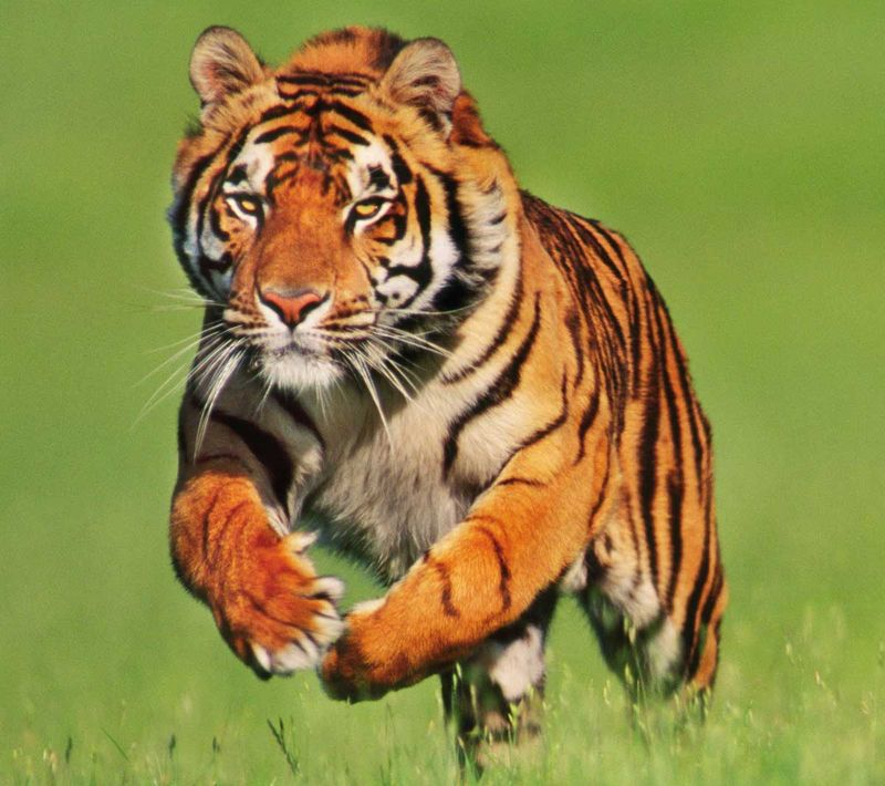 Selva-del-tigre